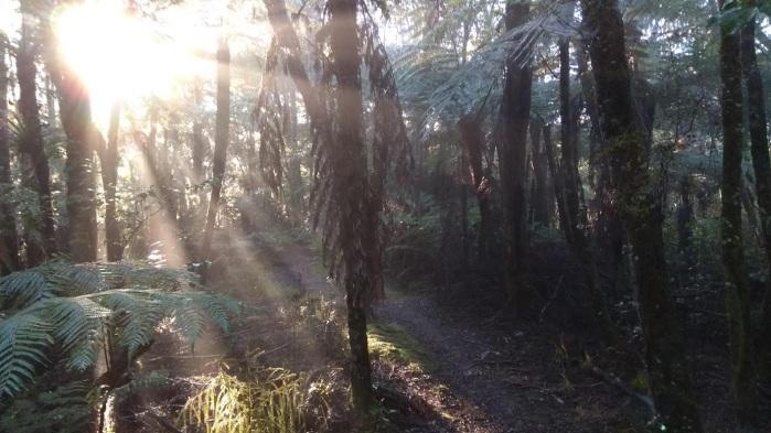 Coronation reserve morning